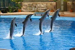 Dolphins Show in Dubai