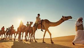 Evening Desert Safari Camel Riding